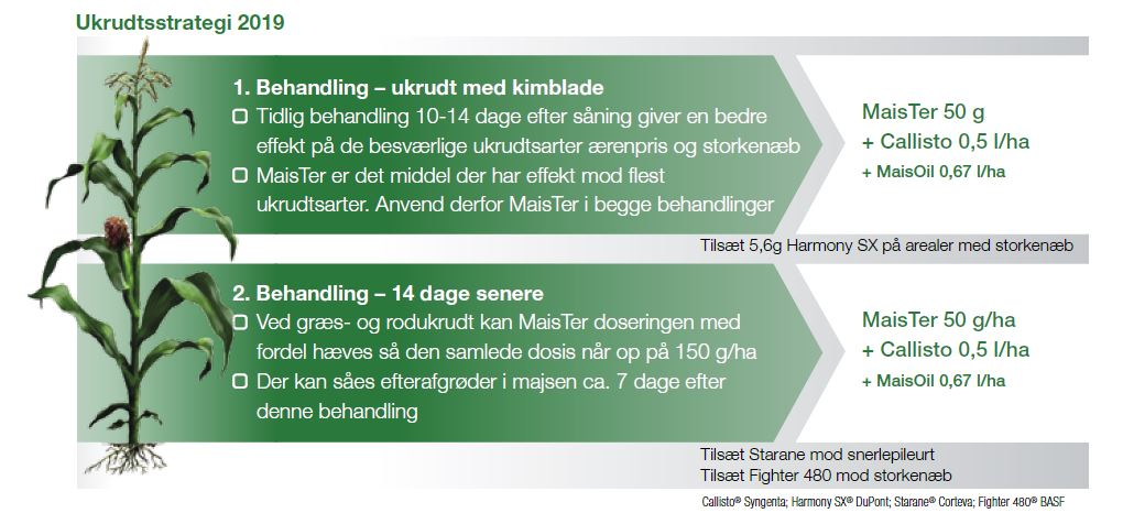Ukrudtsstrategi for majs